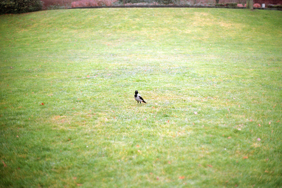 loneliness of stuffed bird-3